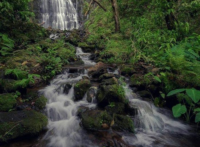 Hamama falls Kaneohe